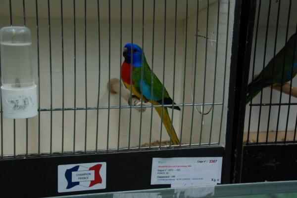 mes oiseaux primes au championnat france 2013