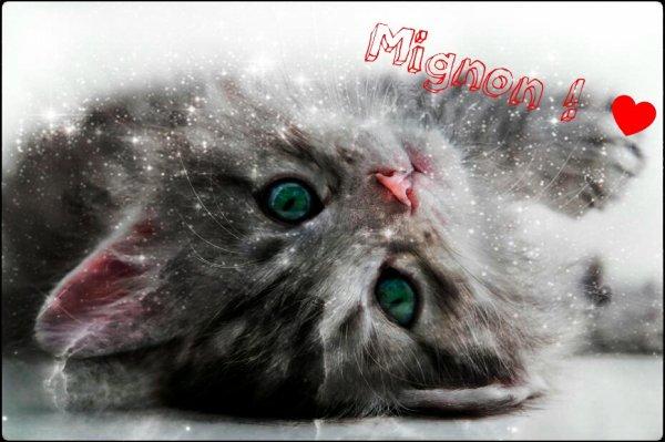 Chaton mignon ! ♥