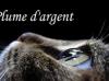 Plume--d-Argent