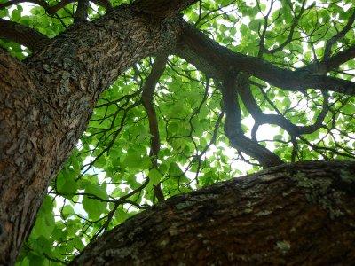 « Retourner dans ces rues là, s'asseoir sous cet arbre & fermer les yeux ... Souviens-toi, ici ... C'était il y a 10 ans ... »