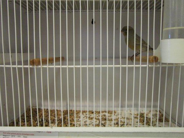 Mes noirs ailes grises jaune mosaïque à Gémenos