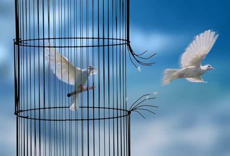 Envoles toi jolie colombe .....................