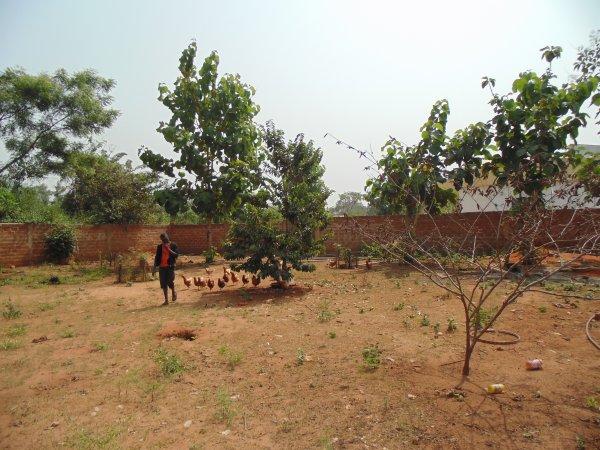 Les plantations et distribution de linge Togo janvier 2015