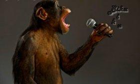 Mes paroles de chansons...