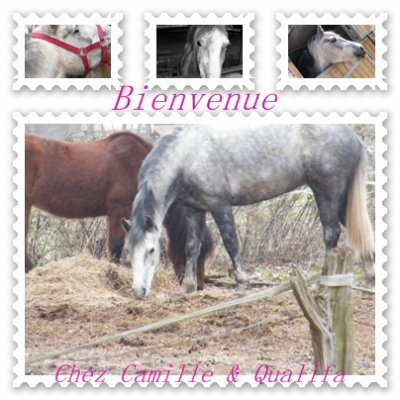 """"""" Rien n'égale la complicité entre un cheval et son cavalier """""""