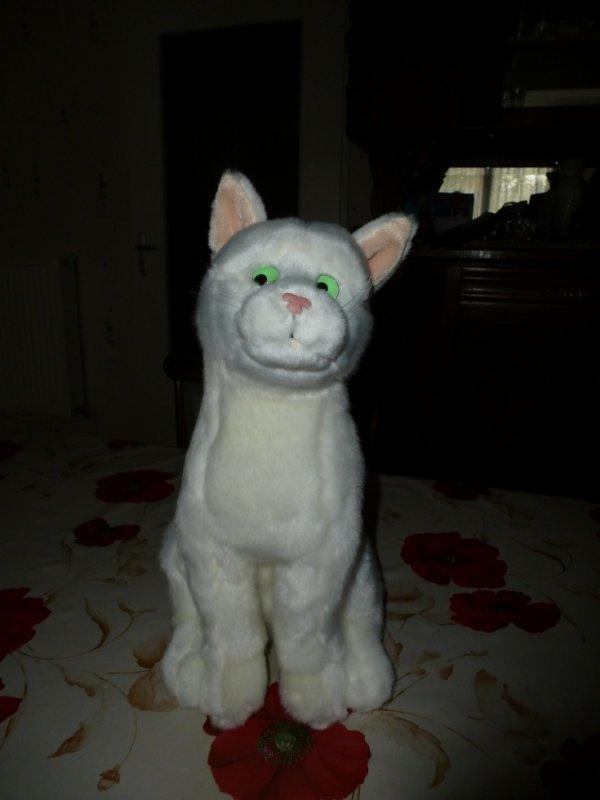 mon chat feu vert