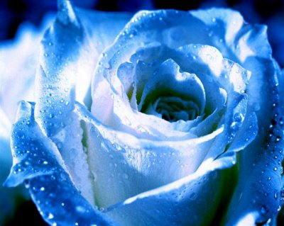Fleure Texte De L Inconu