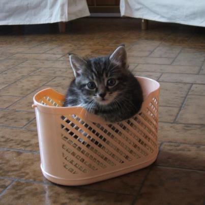 pour Perlita et toutes les amoureuses des chats...