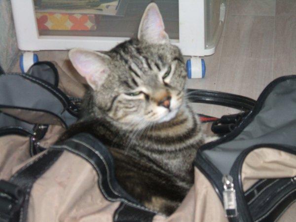 quelques photos de Pasha le Chat...