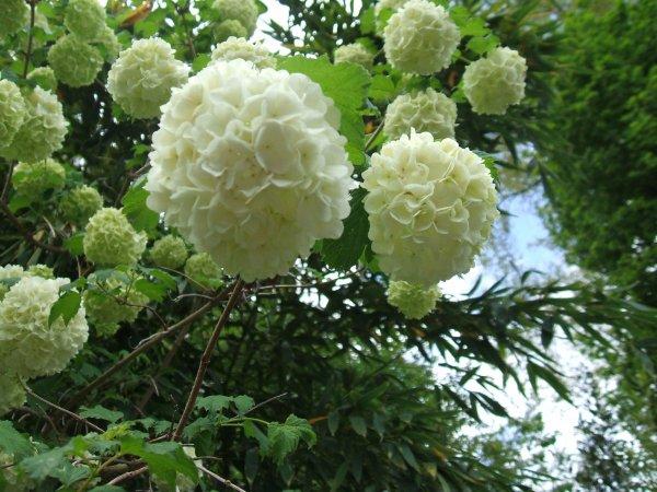d'autres photos du jardin...et des plantes, à l'intérieur...