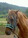 Photo de monde-de-chevaux-x