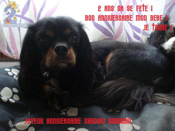 2 Ans De Shadow (l)