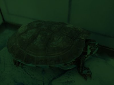 Pascale ma tortue =)