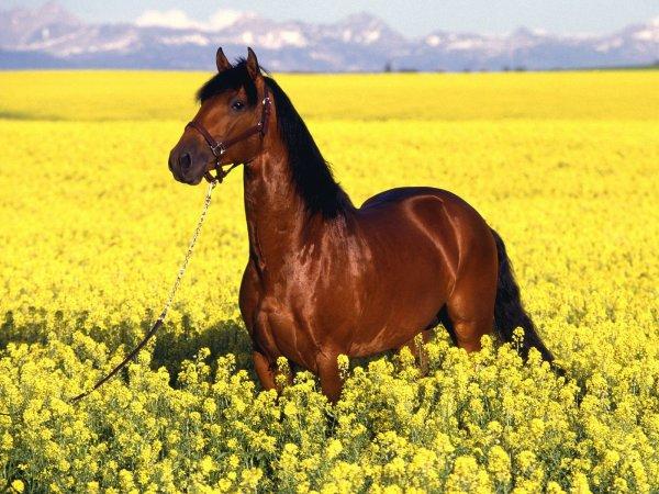 suite de chevaux