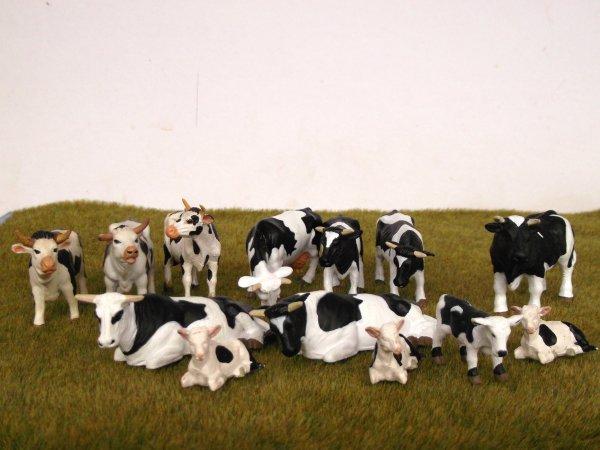 Agrandissement du cheptel bovin