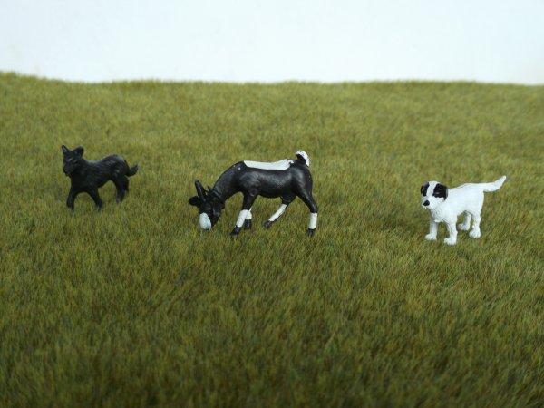 Quand aux chèvres