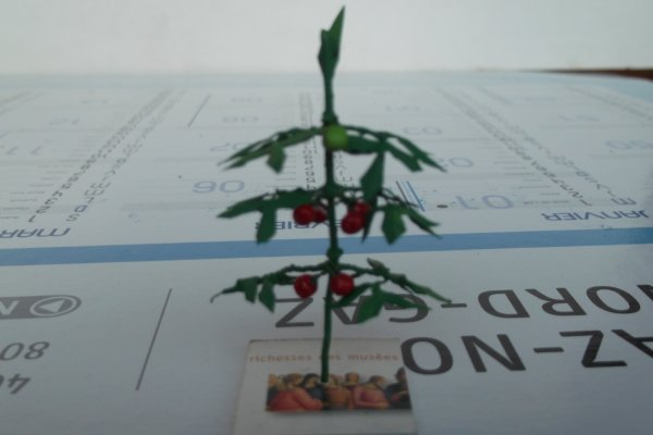 Pieds de tomates (FIN)