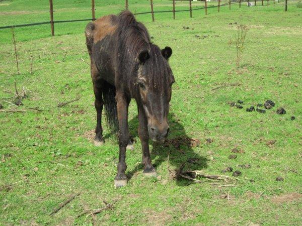 RIP Petit poney merveilleux ♥