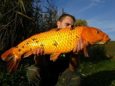 Petite pêche de jour dans l'étang de notre ami Vianney