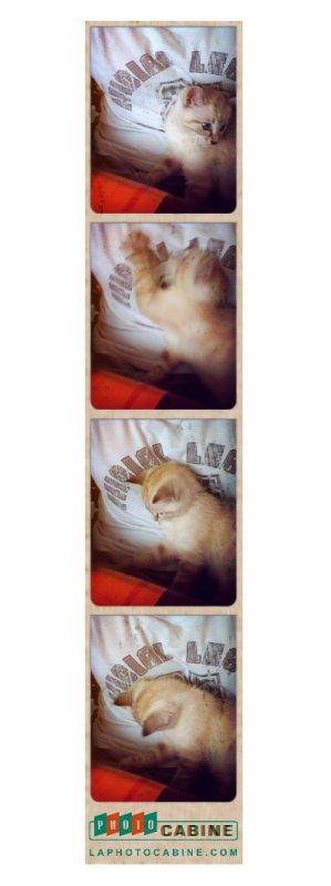 Gina <3 Le petit chat de mes grand-parent !!!