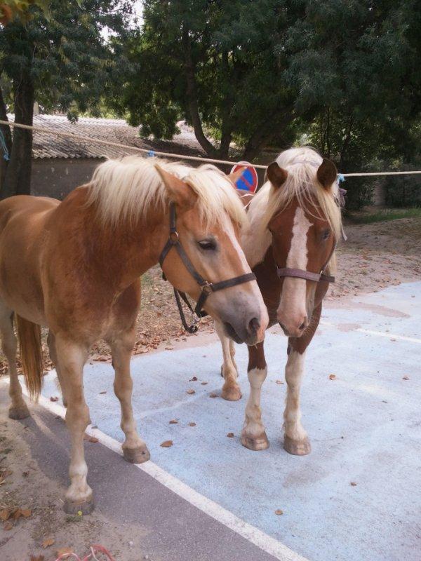 mes deux gros bébés ^^