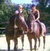 les deux chevaux inséparable