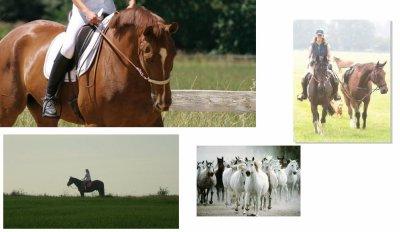 """L'équitation """"éthologique"""" se doit d'être évolutive => bannissons les traditions qui causent du tort à nos chevaux"""