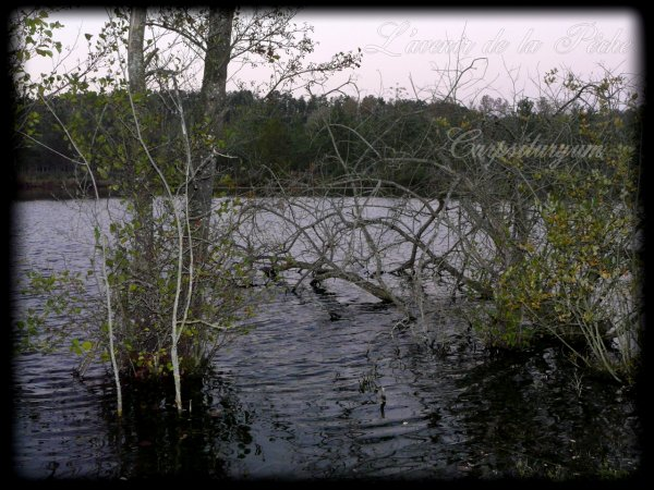 Les Koïs(plan d'eau)