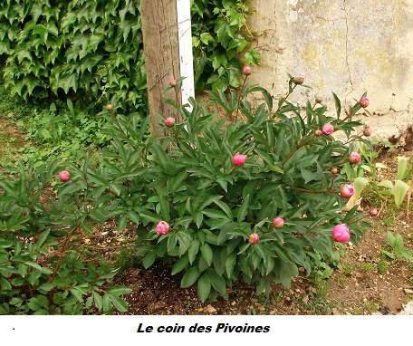 ................                Suite de mes fleurs sur ma terrasse                .......................