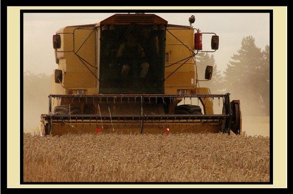 L'agriculture , un métier , une passion , une histoire de famille , qui peut se transmettre de génération en génération... Nous , nous sommes la quatrième génération à la ferme , et peut être que le fiston succédera ?