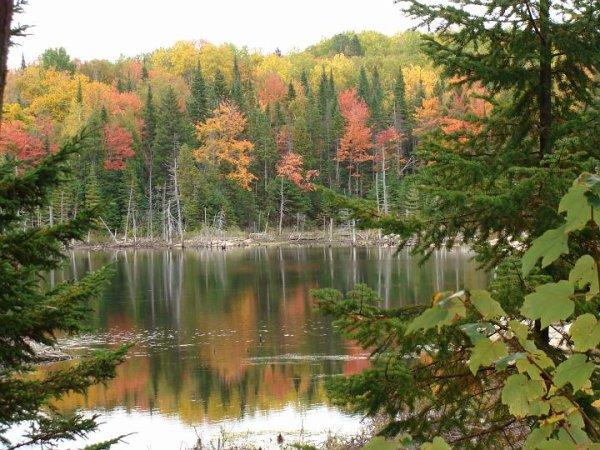 Belles couleurs d'automne , pour remonter le moral et la forme !!  Profitons de ce bel été indien et Bonne fin de semaine à vous tous les amis ........ Bientôt un article , promis