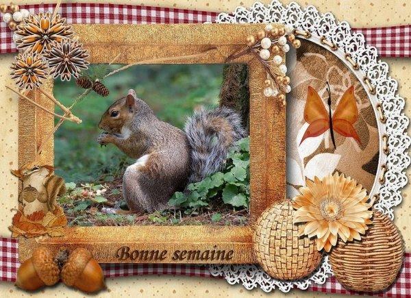 A tous Bonne semaine et avec le soleil d'automne !!