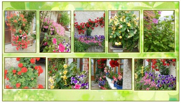 Elles ont souffert du manque de soleil , mais elles ont tout de même pousser, grandies, et maintenant je me régale de leurs couleurs éclatantes ....... Mes Fleurs  !!!