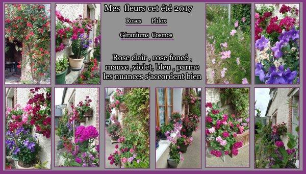 Mes fleurs cette année : Après le printemps et les pensées , les géraniums , les fushias , les jasmins , les rosiers , les hibiscus , les asltromérias, les campanules , les phlox, les cosmos ,les dipladénias , les clématites, la lavande , place cette année aux roses variés  ,violet ,parme, bleu . Çà change  !!!