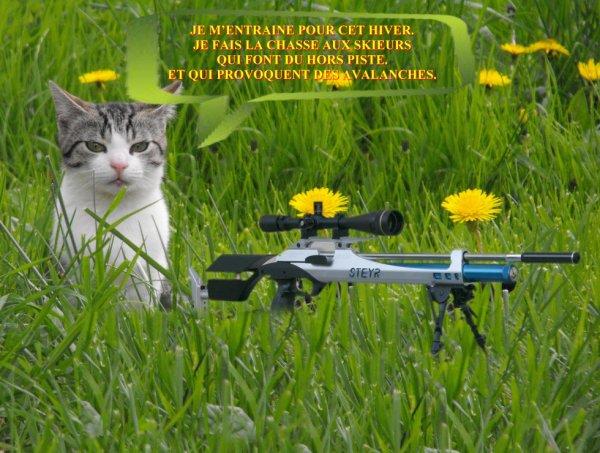Un chat sniper :
