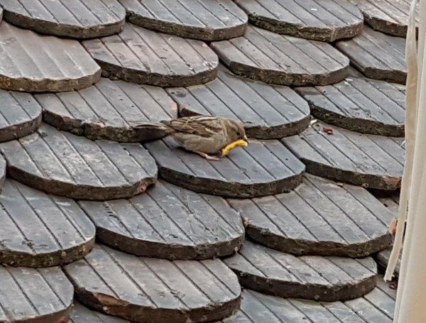 Un oiseau :