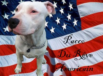 PACCO Du Reve Americain .......