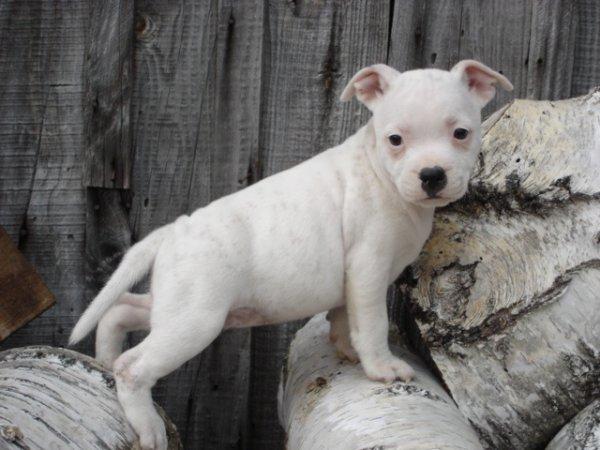 Voici ma petite Chipie arrivée au mois de décembre 2011 la petit Ganja.