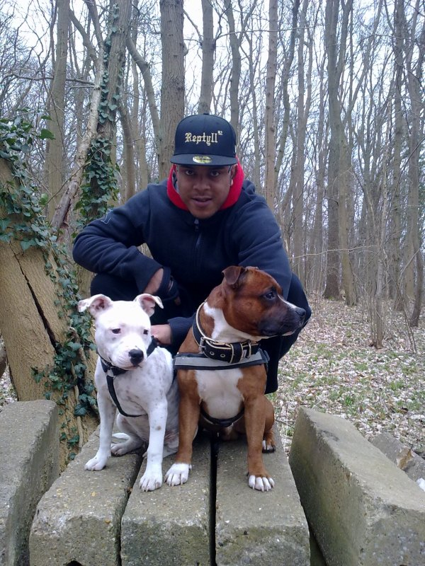 Les supers staffies du crew REPTYLL