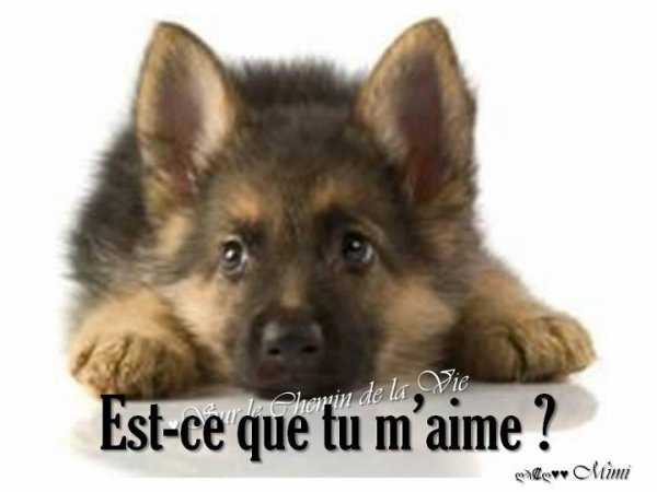 Bonne question ...