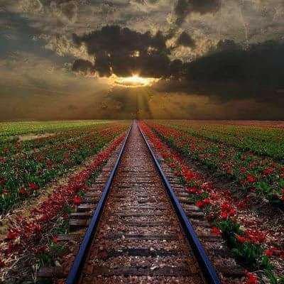Le train de la vie ...