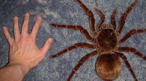 Toute mignonne cette Belle araignée <3