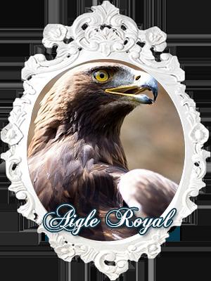 L'Aigle Royal
