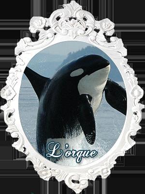 L'orque -Épaulard