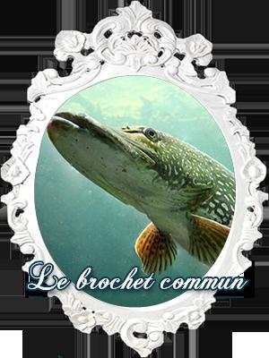 Le Brochet
