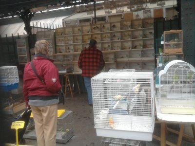 marché aus oiseaux de paris