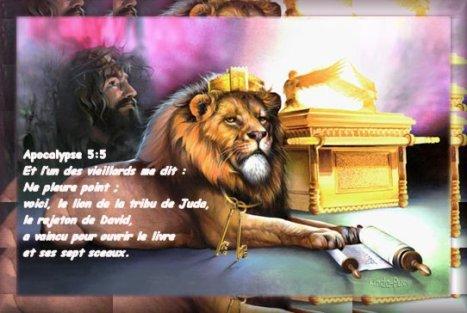 LE LION DE LA TRIBU DE JUDA