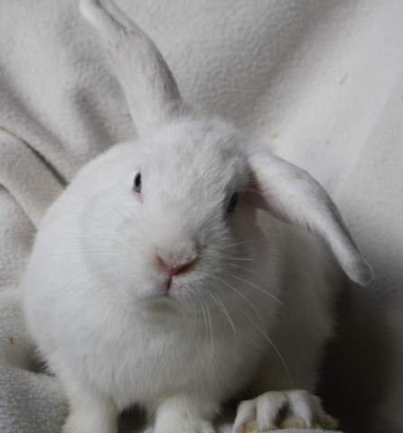 Où acheter un lapin ?
