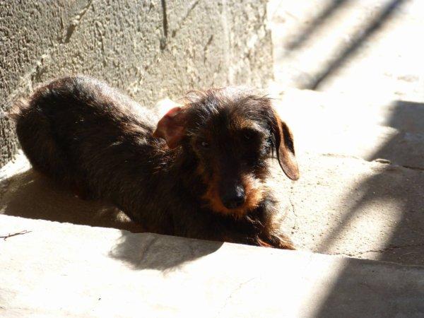 Django prend un bain de soleil ☀️