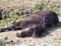 Les poneys <3